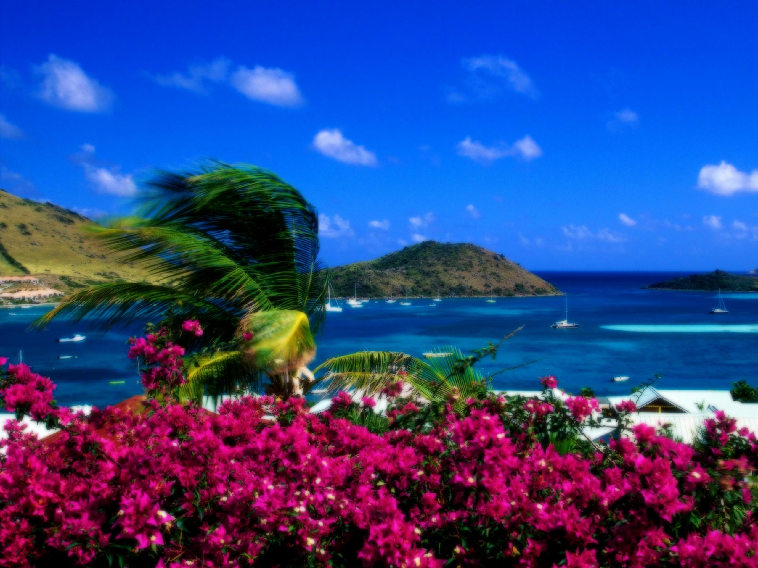 Landscapes Beach Wallpaper 2560x1920 Landscapes Beach Flowers Palm 2560x1920