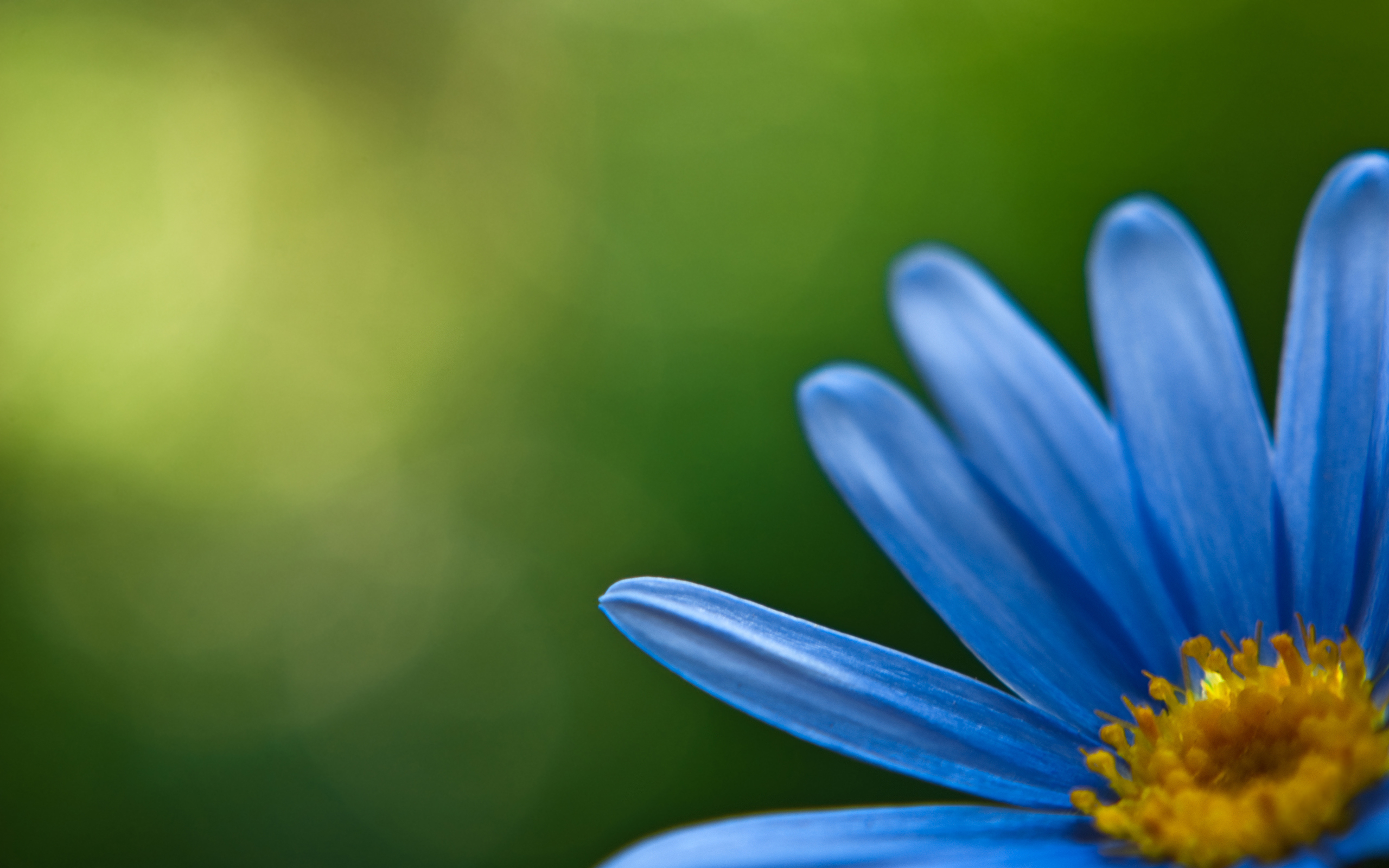 Blue Flower HD Wallpapers 2560x1600