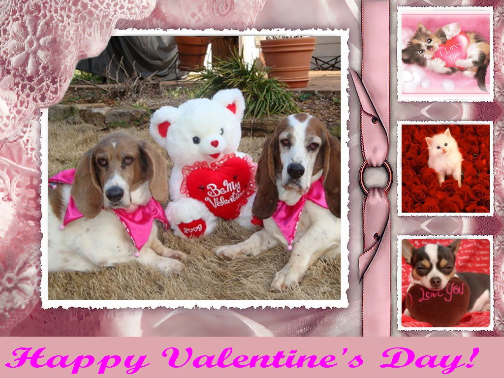 Valentine Animal Wallpaper Wallpapersafari
