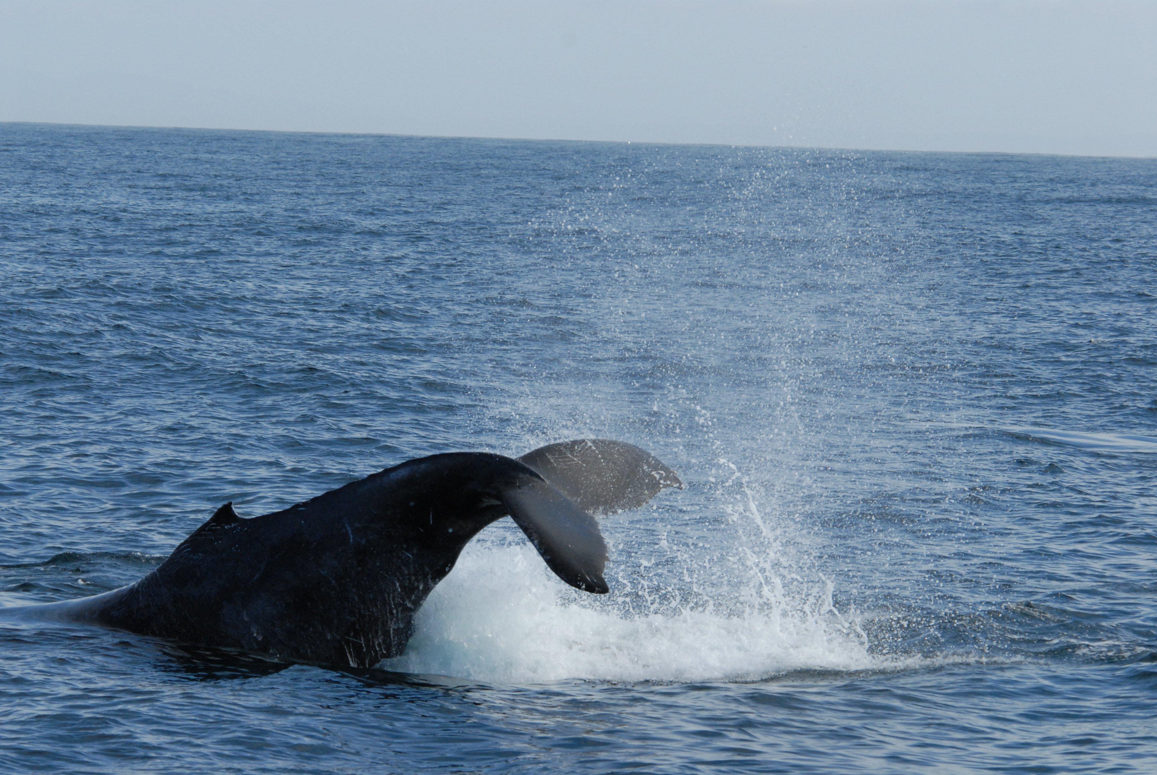 URL httpwwwsmscscomphotohumpback whale wallpaper17html 3872x2592