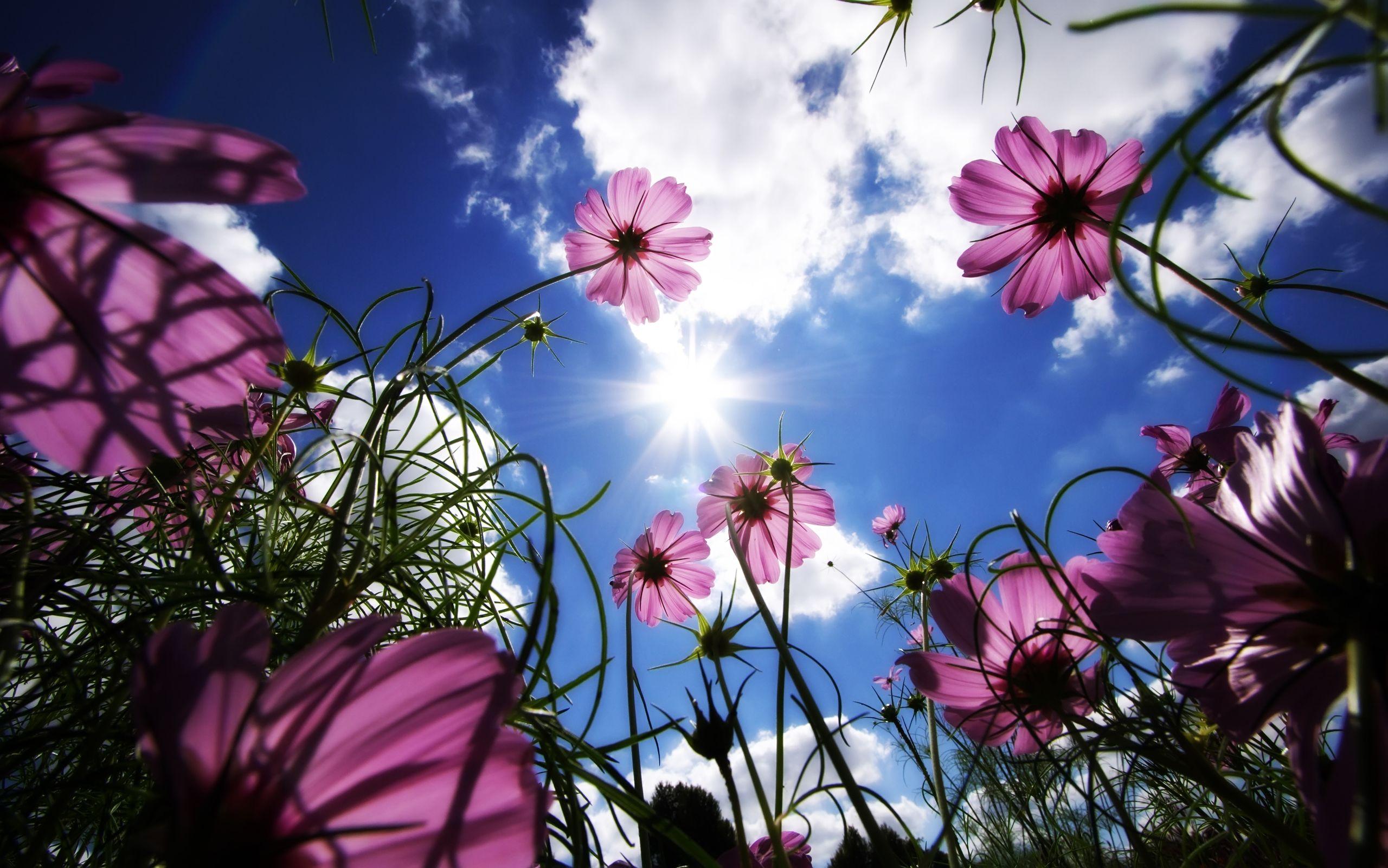 Spring Desktop Wallpapers   Top Spring Desktop Backgrounds 2560x1600