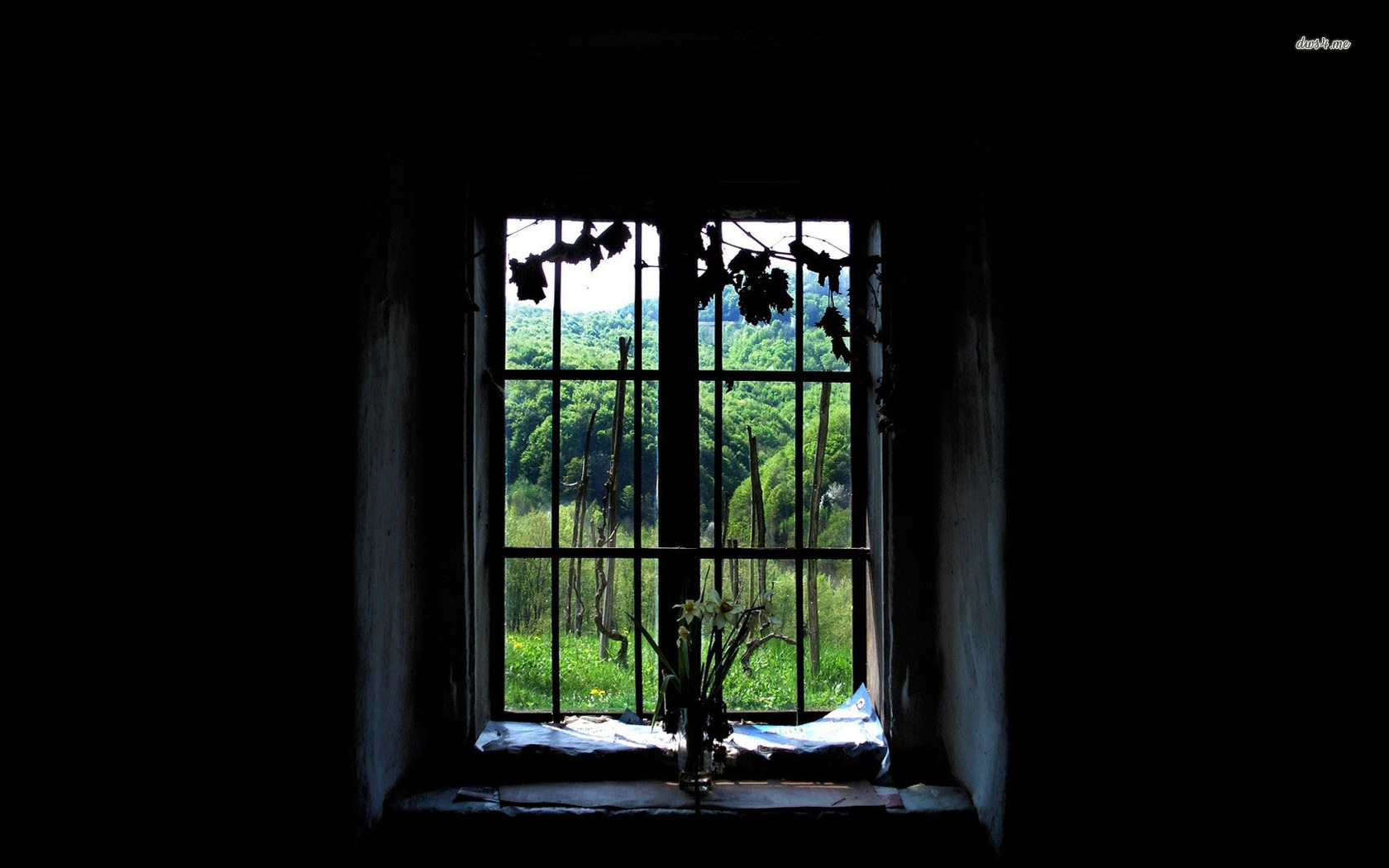 in old window wallpaper 1280x800 Daffodils in old window wallpaper 1680x1050