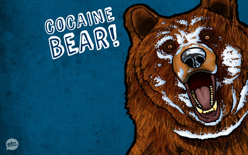 cocaine bears 1600x1000 wallpaper Animals Bears HD Desktop 800x500