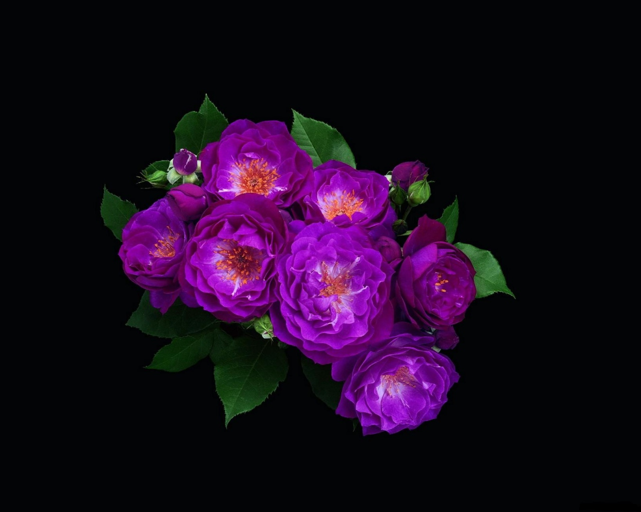 Flowers on Black Background Wallpaper - WallpaperSafari