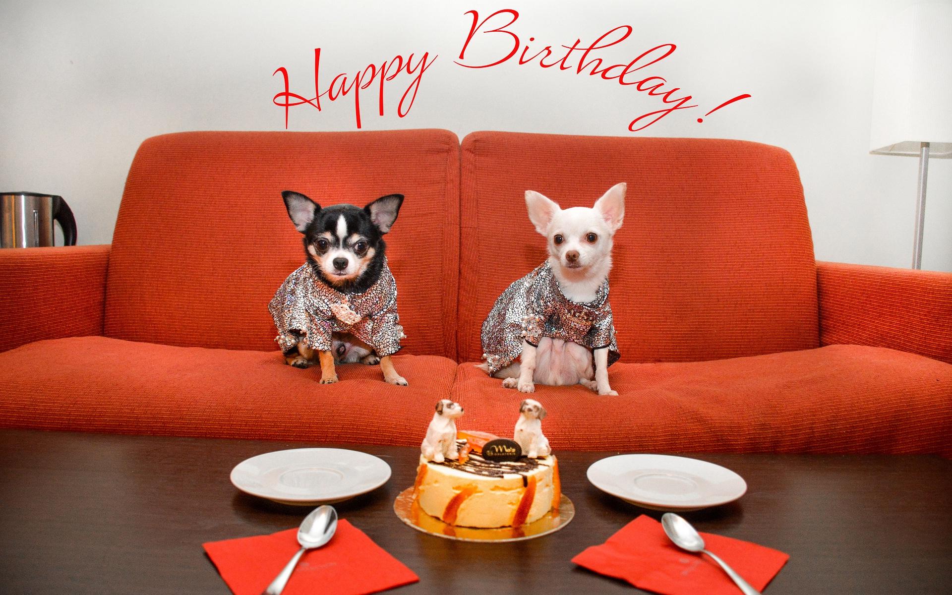 Similiar Funny Happy Birthday Background Keywords 1920x1200