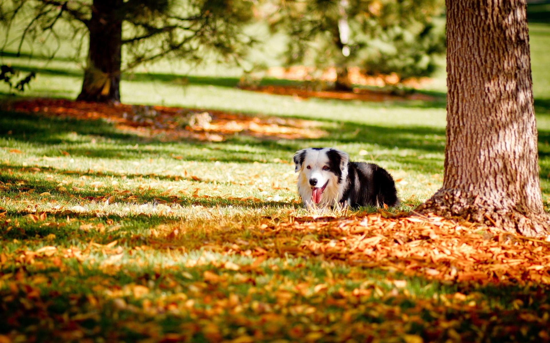 Autumn Dog Wallpaper Autumn is my favourite 1920x1200
