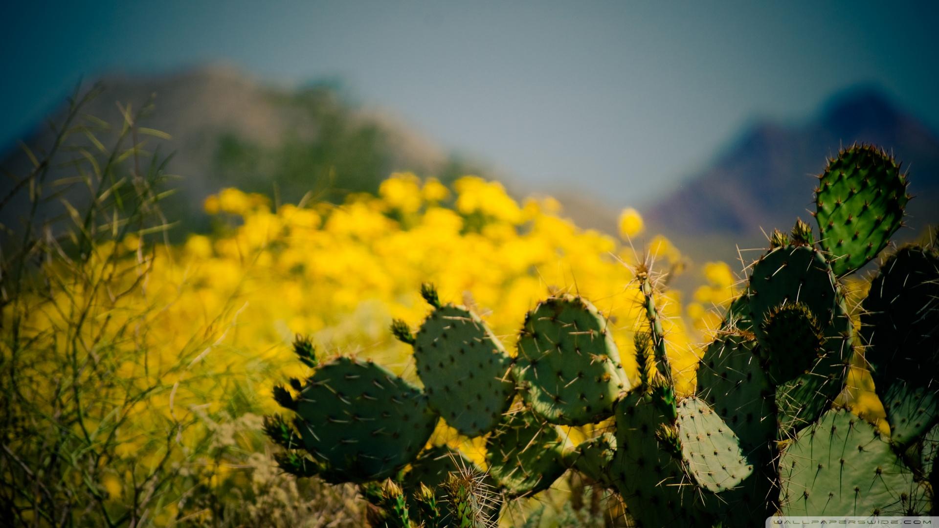 Cactus Taliesin West Scottsdale Arizona Wallpaper 1920x1080 Cactus 1920x1080