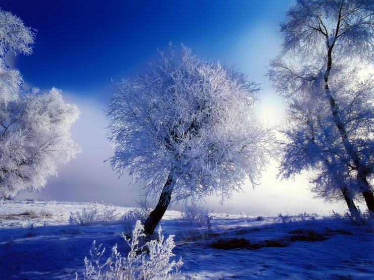 snowy tree wallpaper 740x555