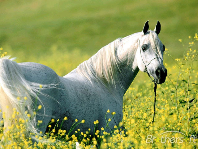 Horses Screensaver Horses Screensaver 10 Download 640x480
