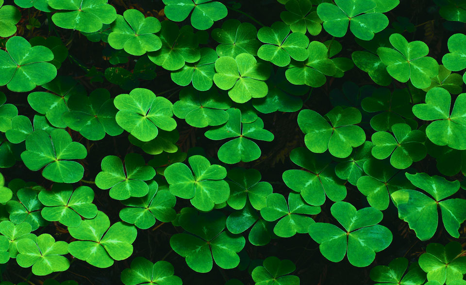 Background Clovers Vga Images at Clkercom   vector clip art 960x588