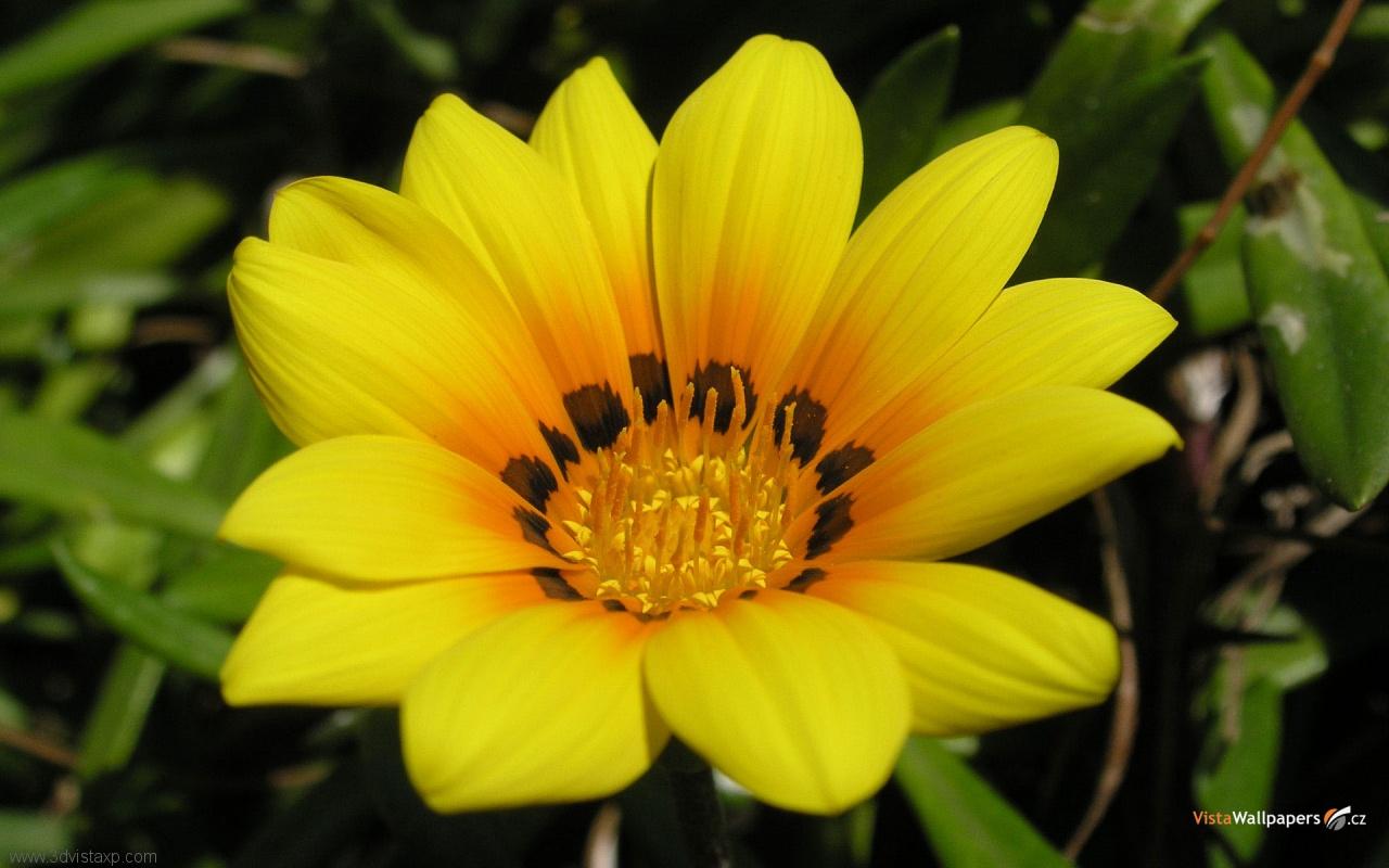 download Flower Wallpapers Beautiful flower wallpapers Flower 1280x800