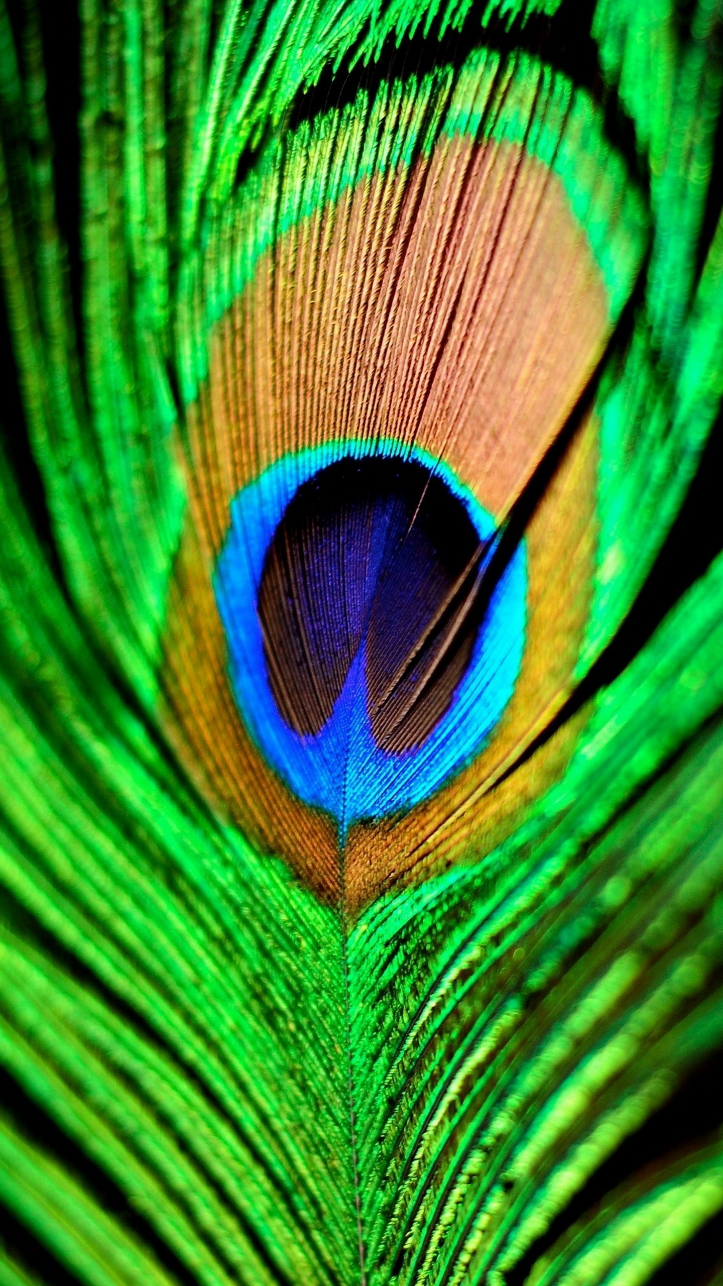 quad hd mobile phone wallpapers 1440x2560 peacock feather 1440x2560