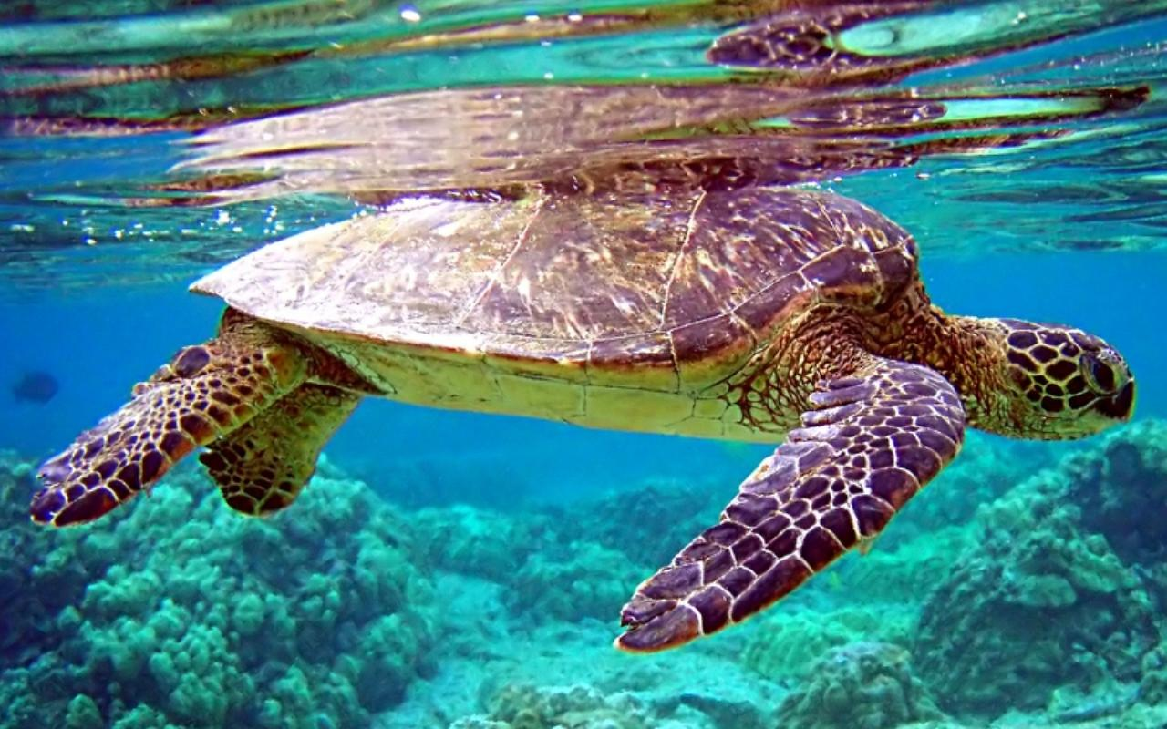 Wallpaper download life - Free Touch Sea Turtle Live Wallpaper For Android Htc First New Htc
