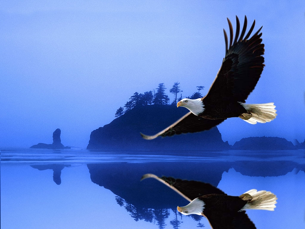 Eagle Birds Wallpapers   Entertainment Only 1024x768