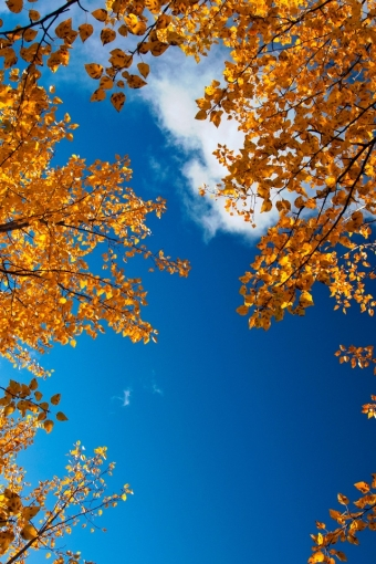 Fall Leaves Backgrounds For Iphone Autumn leaves and sky iphone 340x510