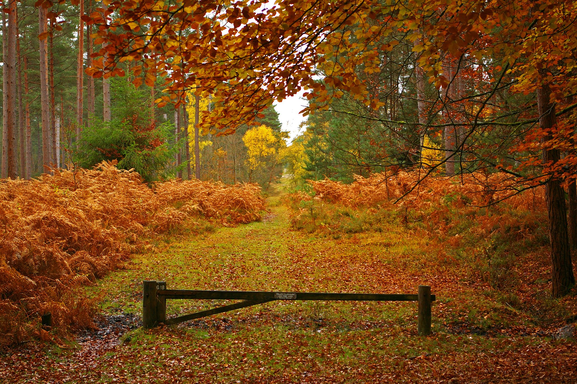 New Forest in Hampshire England autumn landscape h wallpaper 2000x1330