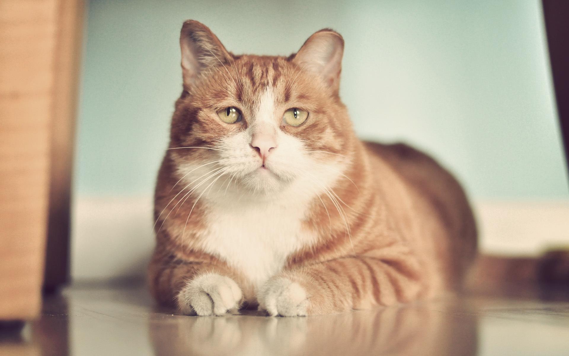 Images Of Big Fat Cats