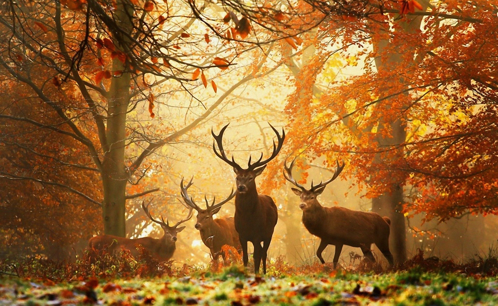 Deer Wallpaper for Walls wallpaper Deer Wallpaper for Walls hd 1920x1180