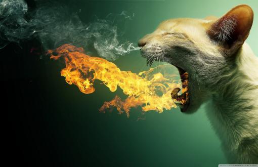 HD Flaming Cat Wallpaper 510x330