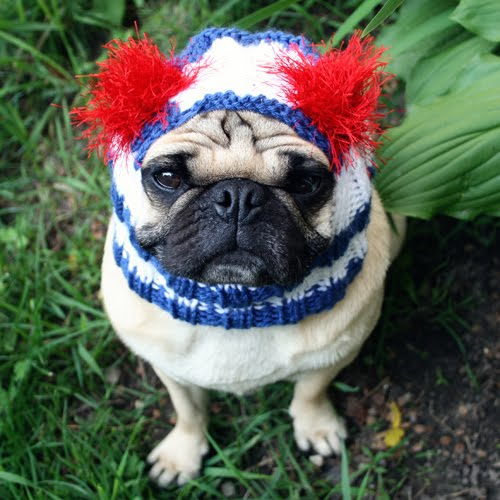 Flag Day Pug photo and wallpaper Beautiful Nice Flag Day Pug pictures 500x500