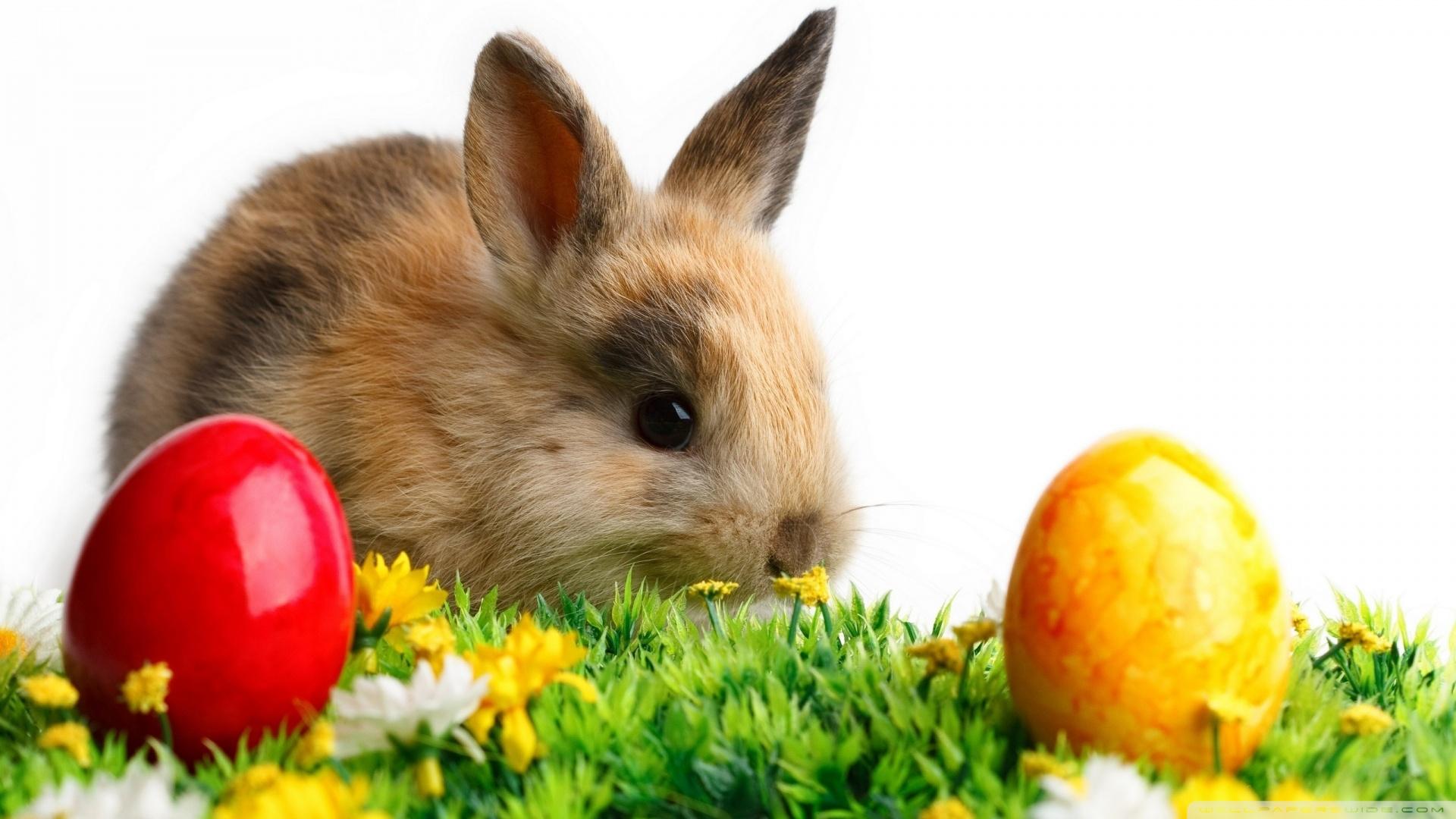 Easter Cute Rabbit Wallpaper 1920x1080 Easter Cute Rabbit 1920x1080
