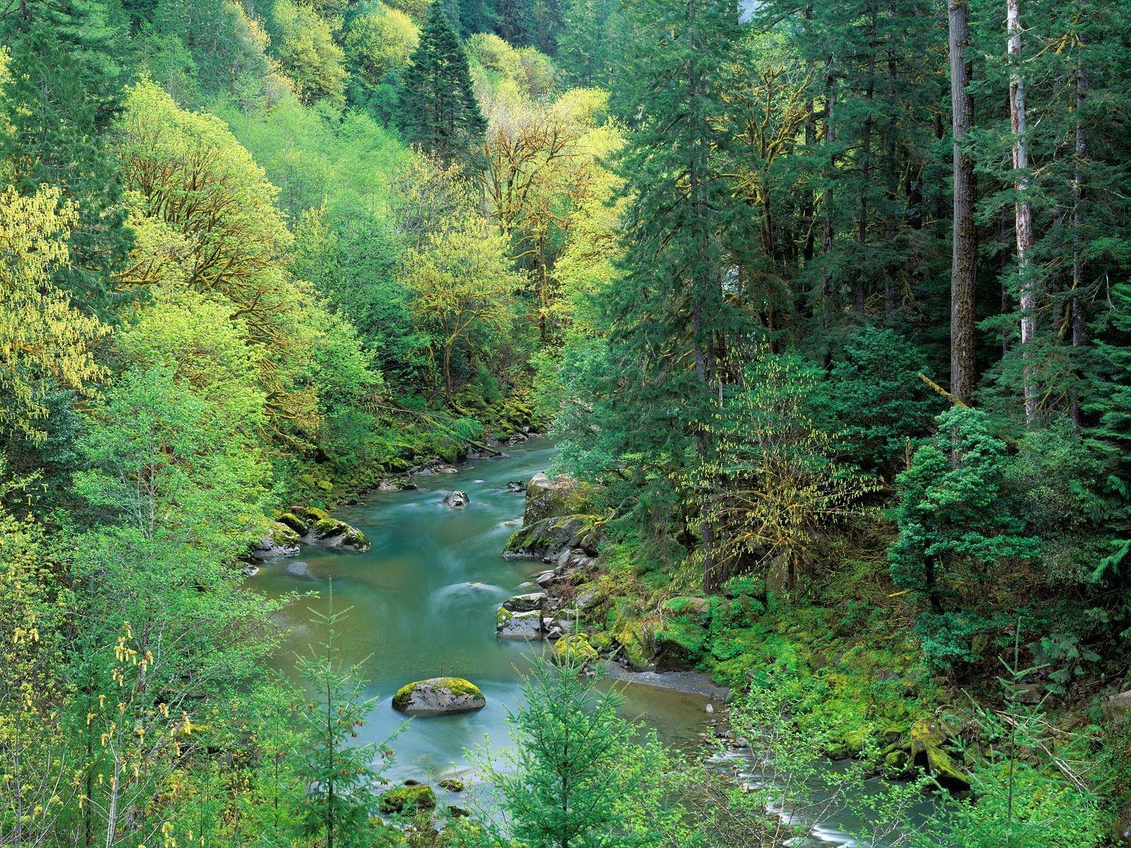 Nature Scenes   Rivers and Creeks n 1 Fiumi e Insenature 1600x1200
