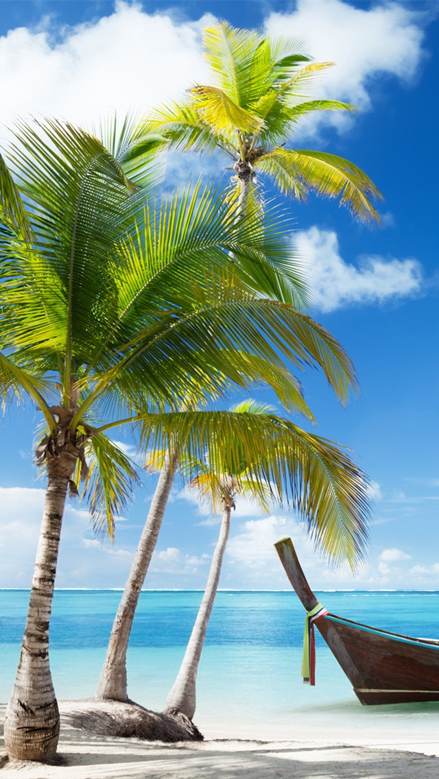 Image Result For Beach Palm Tree Wallpaper Iphone Hd Wallpaper