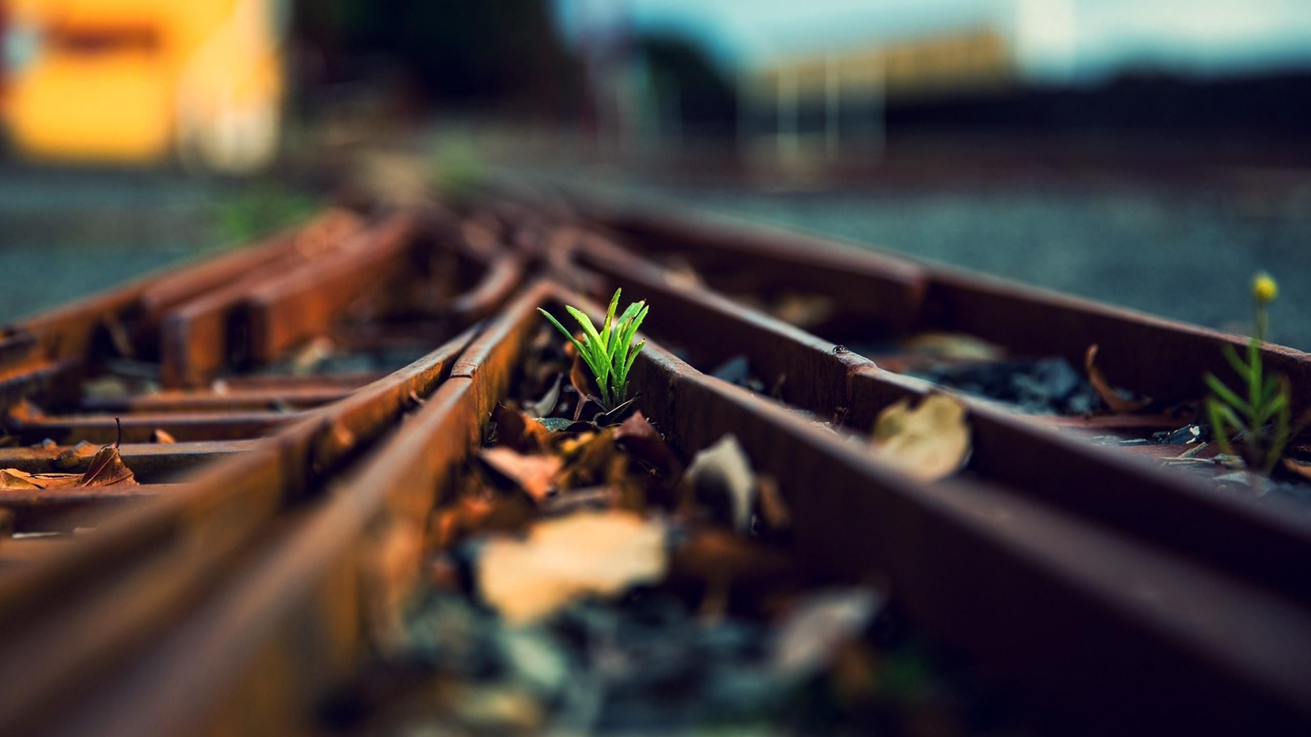 grass tracks train tracks wallpaper background 2560x1440