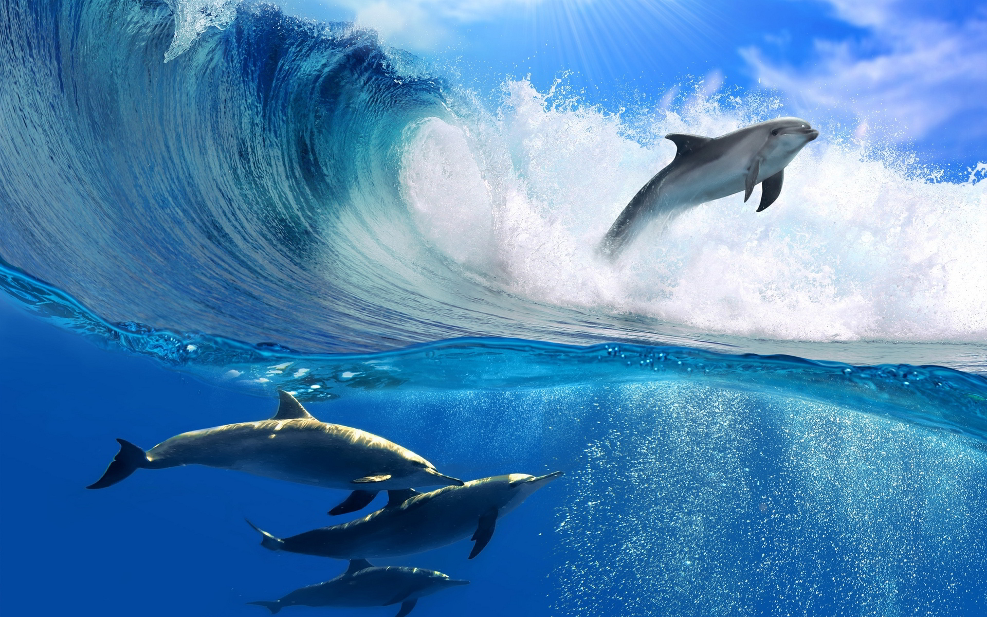 Dolphins wallpapers high definition wallpapers cool nature - Wave Desktop Wallpaper Wallpaper High Definition High Quality