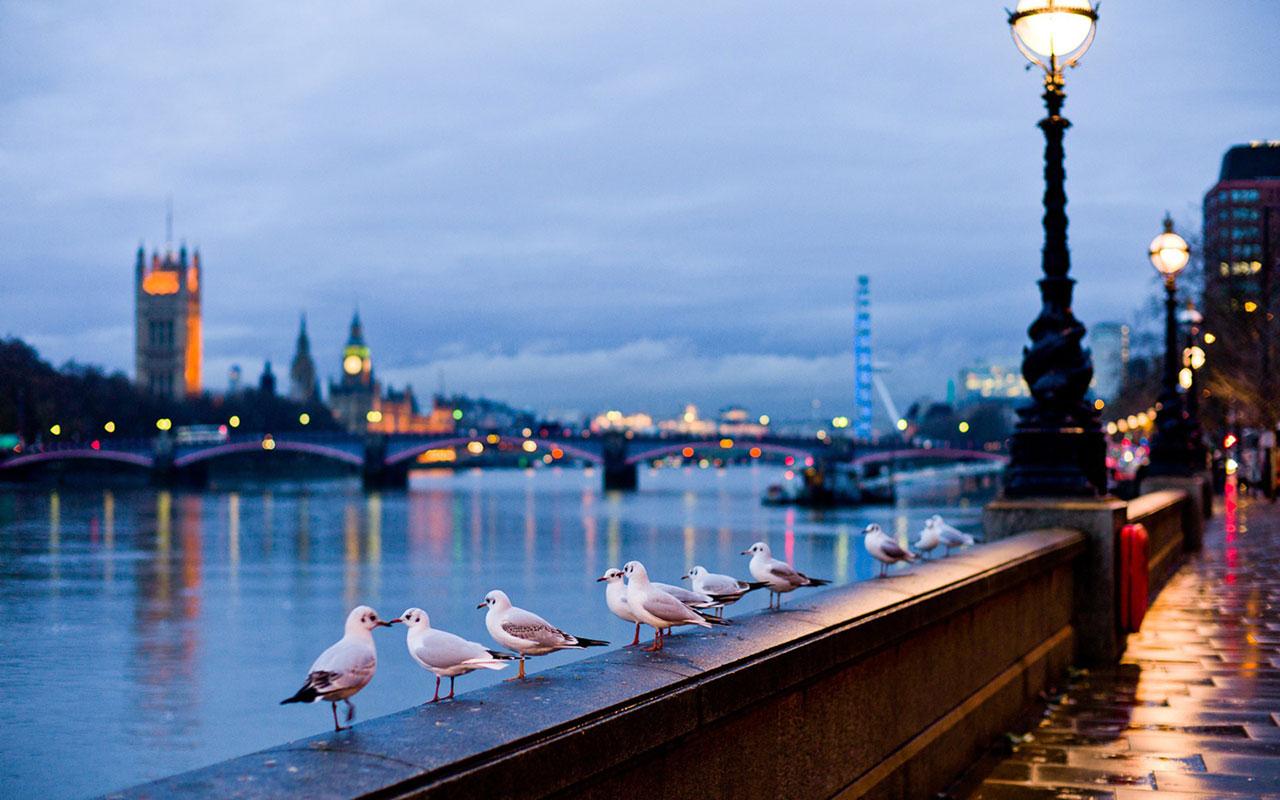 Animal WallpapersFreedom of flying seagulls HD desktop wallpaper 10 1280x800