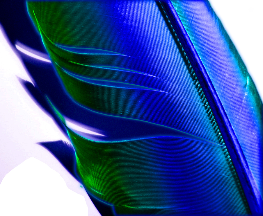 Phoenix Feathers School of Magic images Phoenix Feather HD fond d 904x744