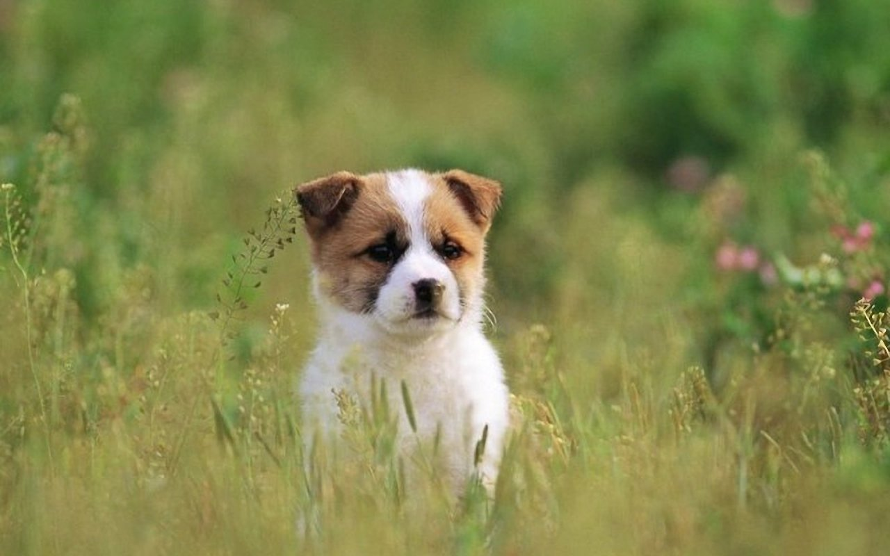 Dog Have Go For A Spring Outin 1280x800 Wallpapersother 1280x800 1280x800