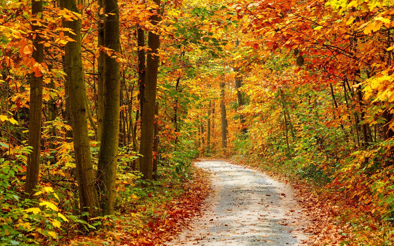 57 Autumn Forest Wallpaper On Wallpapersafari