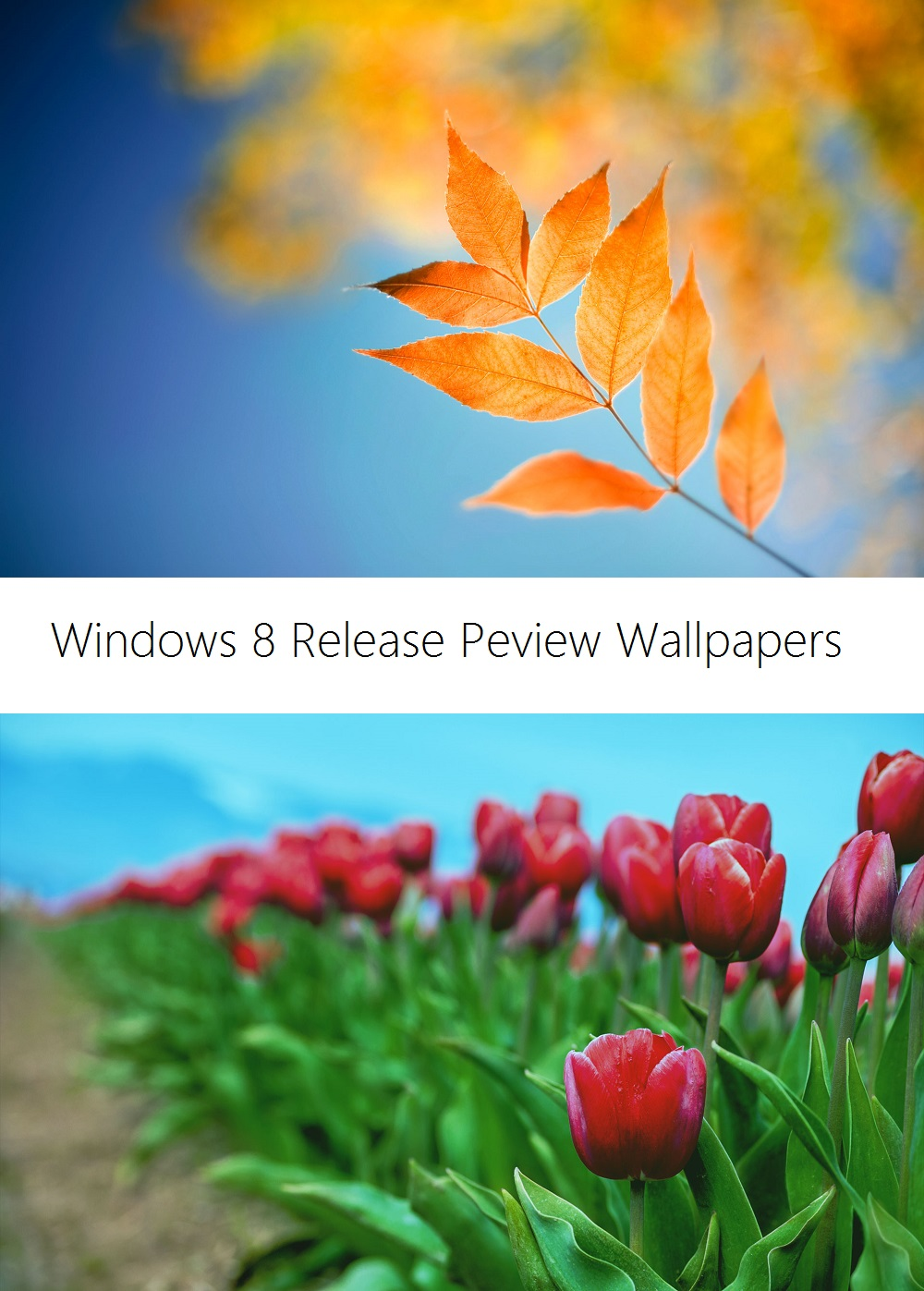 Windows 8 Release Preview Wallpapers by Misaki2009 1000x1397