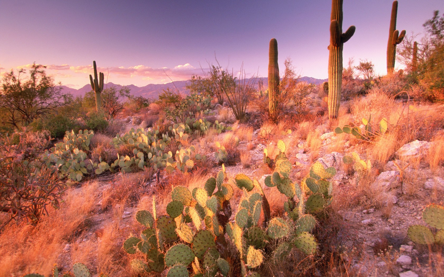 Best 41 Saguaro National Park Wallpaper on HipWallpaper 1680x1050
