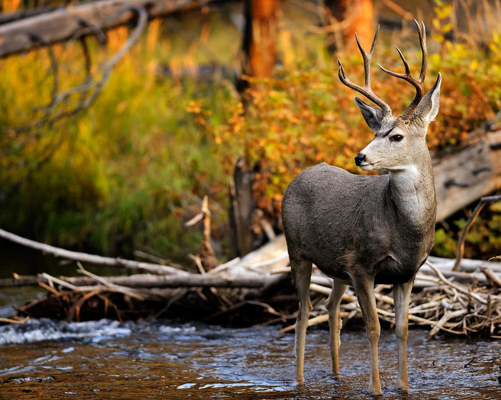 Wide-Eyed Wonder by James Marvin Phelps on 500px | Fine ... |Wide Deer Wildlife