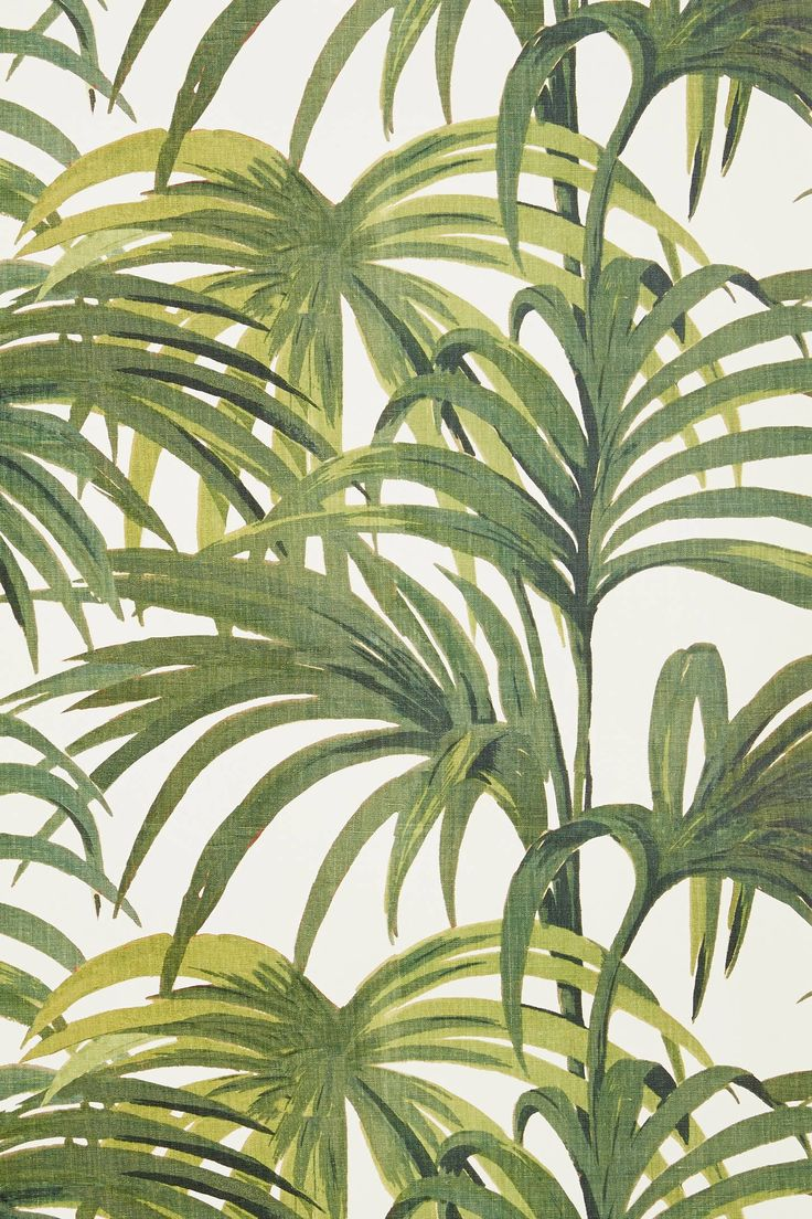 [46+] Tropical Palm Leaf Wallpaper on WallpaperSafari
