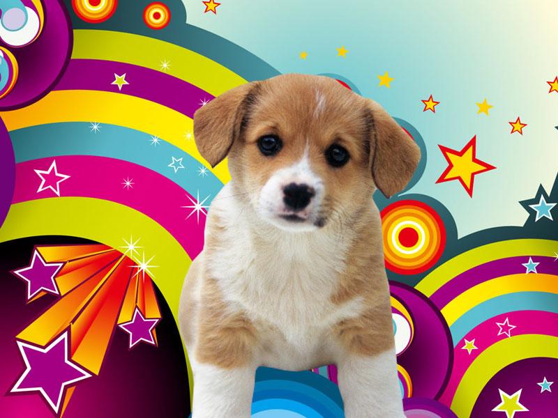 Puppy Wallpaper Downloadjpg 800x600