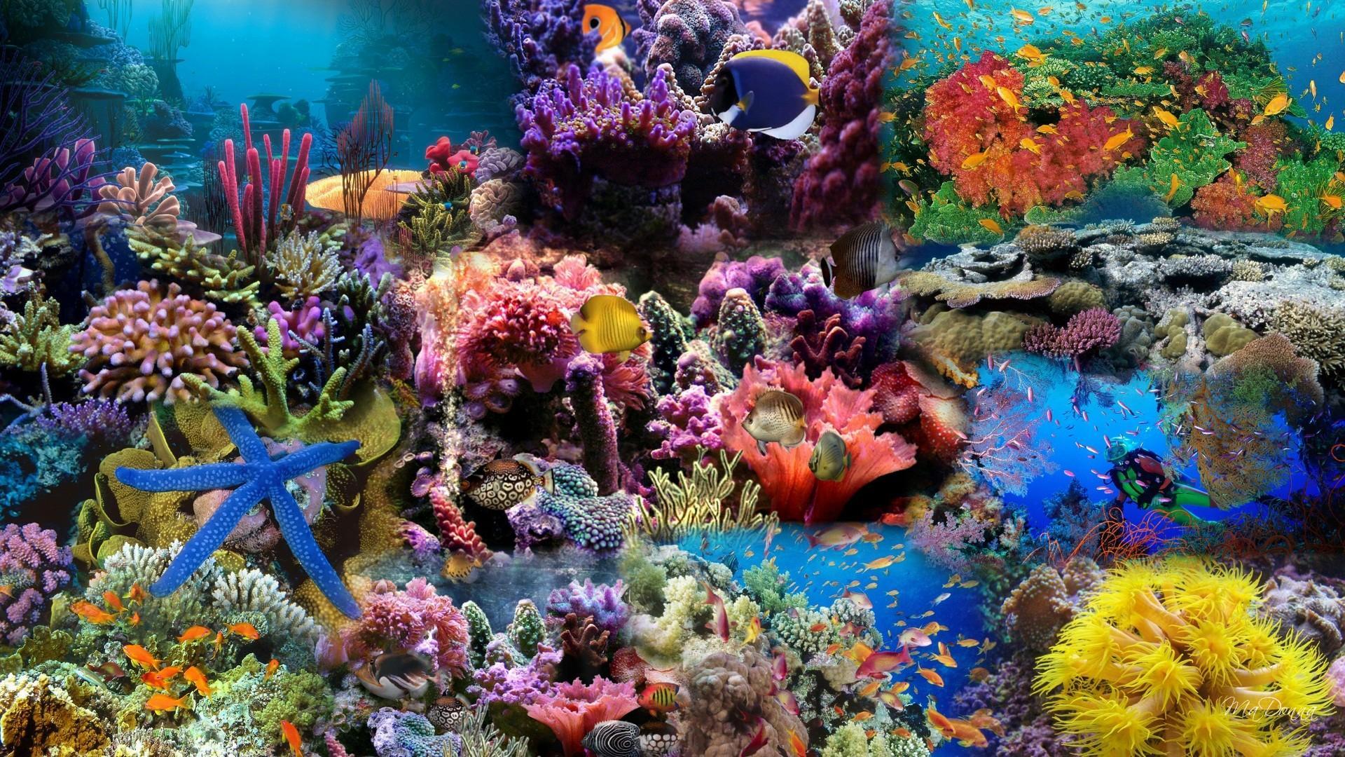 Яркие краски подводного мира  № 618969 бесплатно