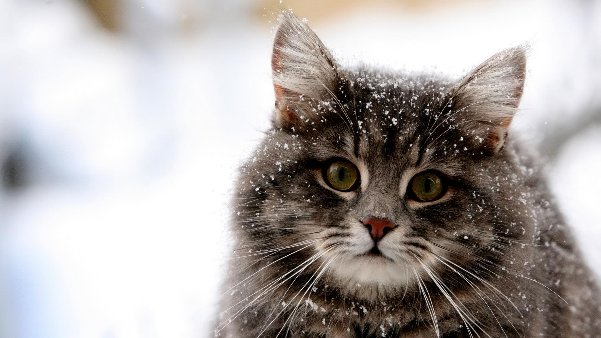 Cute Cat Winter Snow HD Wallpaper Cute Cat Winter Snow 1920x1080