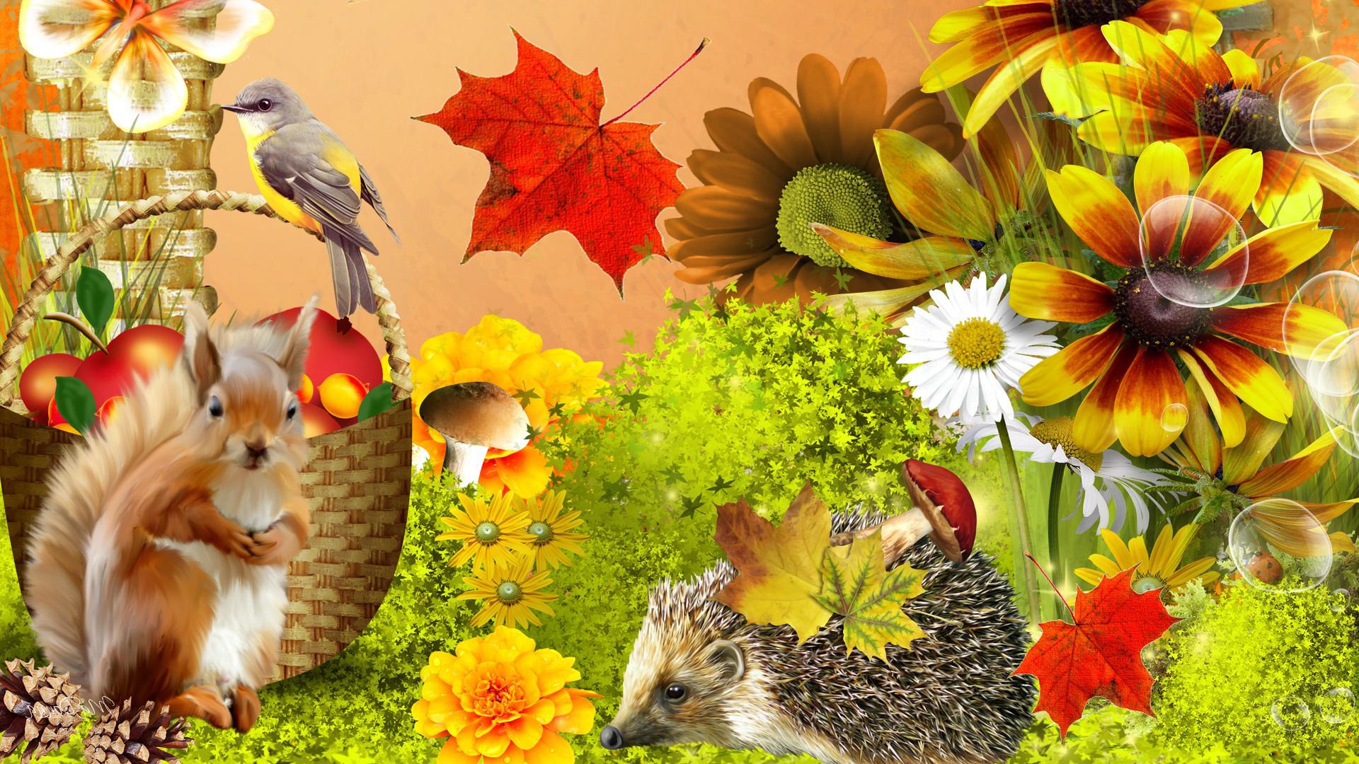 Autumn Flower for Wallpaper WallpaperSafari