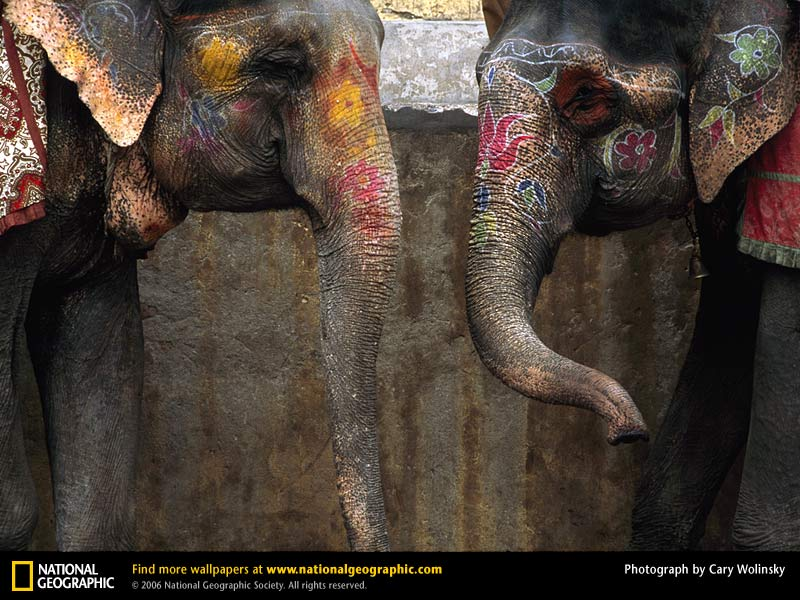 painted indian elephant wallpaper - photo #8