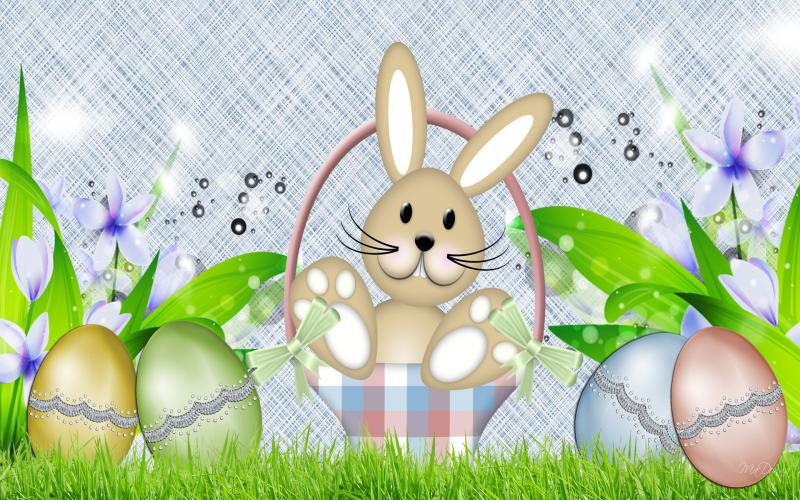 HD Spring Bunny Easter Eggs Wallpaper Download   87300 800x500