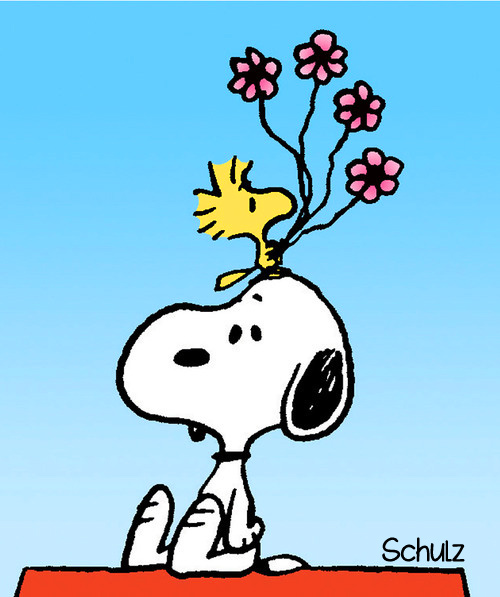 Snoopy And Woodstock computer desktop hd wallpapers backgrounds 500x597