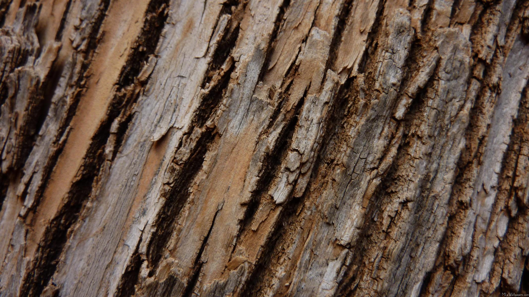 Tree Bark I 2134x1200