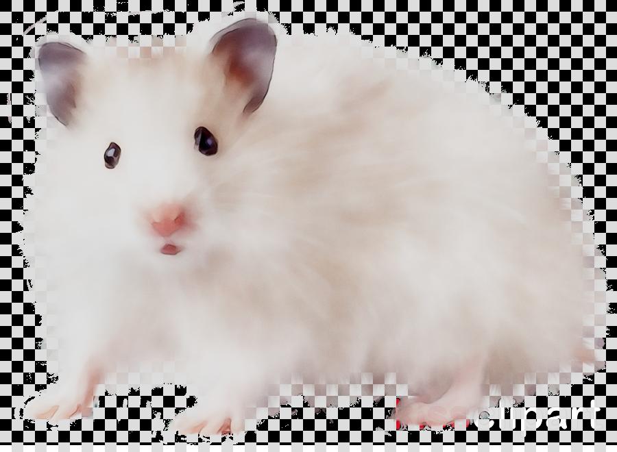 Hamster Background clipart   Rat Mouse White transparent clip art 900x660
