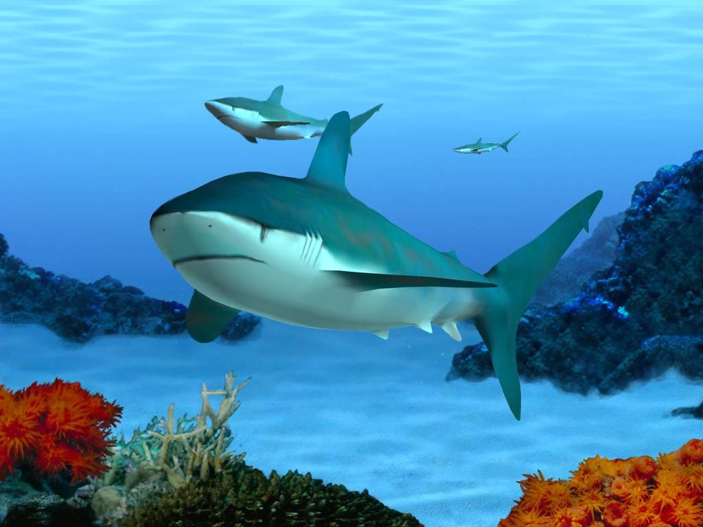 Pictures 3d Marine Aquarium Screensaver Download Mobile Wallpaper 1024x768