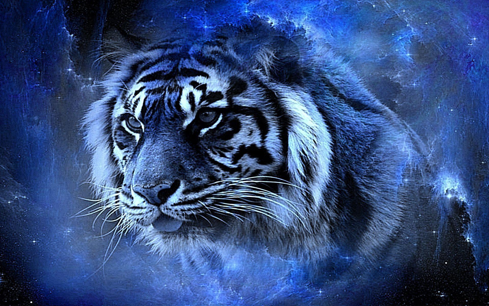 75 Cool Tiger Wallpapers On Wallpapersafari