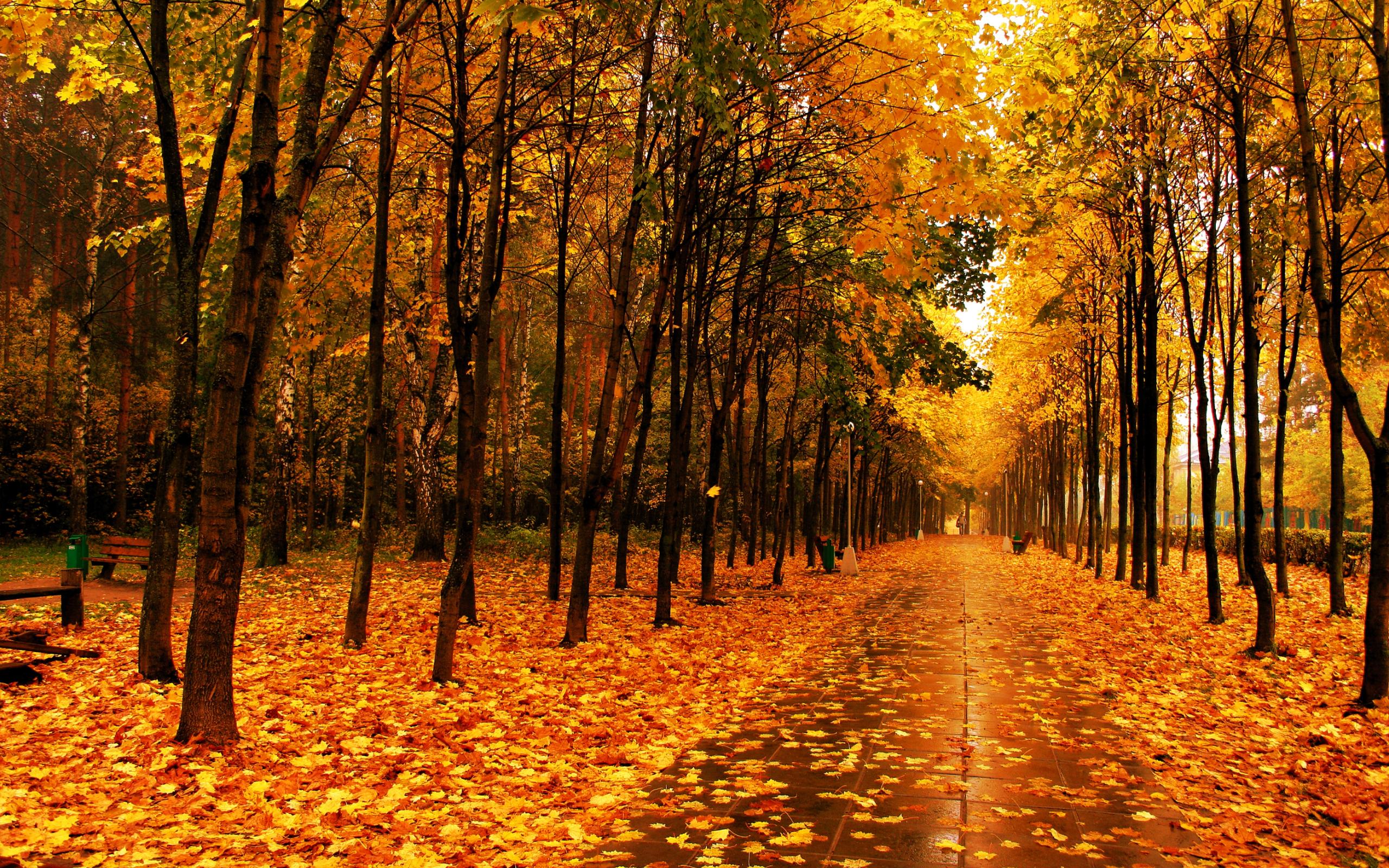 Fall Trees Screensavers wallpaper wallpaper hd 2560x1600