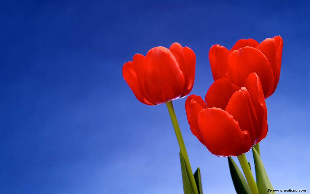 Beautiful Flower Wallpapers For Desktop Animated 4K Resolution 1024x640